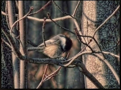 Chickadee Mixed Media - Forest Chickadee by Debra     Vatalaro