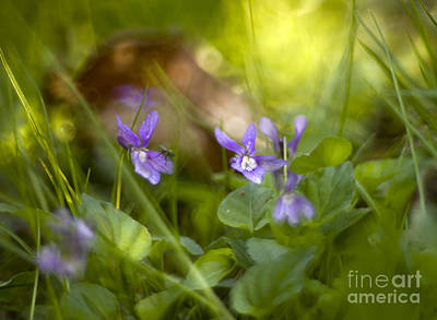 Forest Meadow Print by Angel  Tarantella