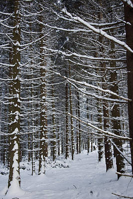 Forest Of Marburg In Winter Print by Axiom Photographic