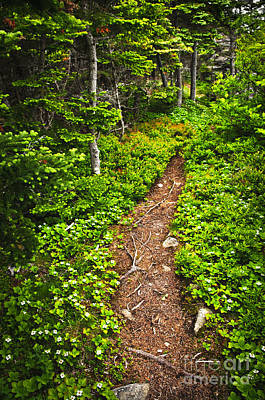 Forest Path In Newfoundland Print by Elena Elisseeva