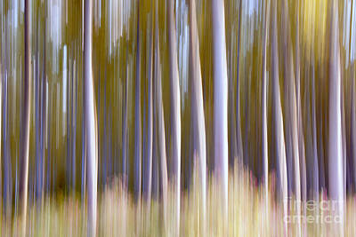 Odon Photograph - Forest Spirit by Odon Czintos