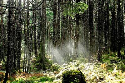Landscape Photograph - Forest Sunlight by Theresa Willingham