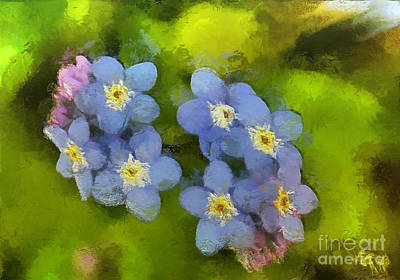 Summer Painting - Forget-me-not Flower by Dragica  Micki Fortuna