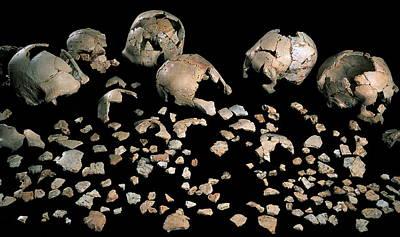 Fossilised Skulls, Sima De Los Huesos Print by Javier Truebamsf