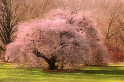 Spring Landscape Mixed Media - Four Seasons Magical Spring by Georgiana Romanovna