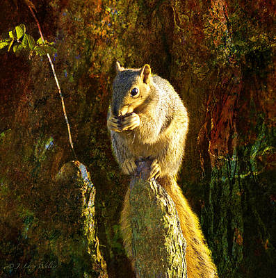 Fox Squirrel Sitting On Cypress Knee Print by J Larry Walker
