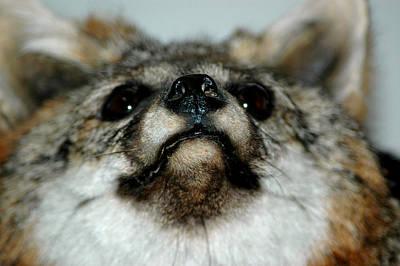 Fox Photograph - Foxy Eyes by LeeAnn McLaneGoetz McLaneGoetzStudioLLCcom