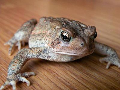 Frog Photograph - Freddy by Trish Tritz