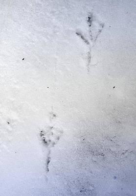 Freezing Print by Greta Thorsdottir