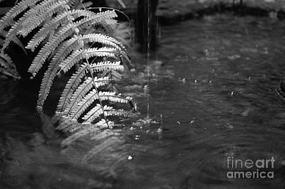 French Quarter Courtyard Fountain Macro New Orleans Black And White Print by Shawn O'Brien