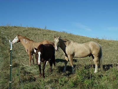 Fresh Horses Original by Brian  Maloney