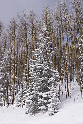 Fresh Snow Tops The Trees In Santa Fe Print by Ralph Lee Hopkins