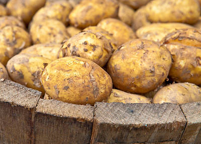 Freshly Harvested Potatoes In A Wooden Bucket Print by Tom Gowanlock