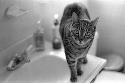 Cat Photograph - Fritz The Cat Brooklyn Ny 2003 by Julie VanDore