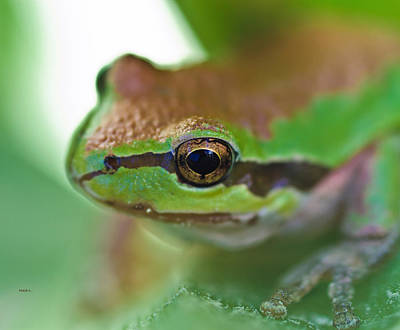 Frog Close Up 1 Print by Mitch Shindelbower