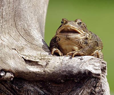 David E Lester Photograph - Frog by David Lester