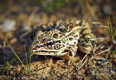 Habitats Photograph - Frog by Elena Elisseeva