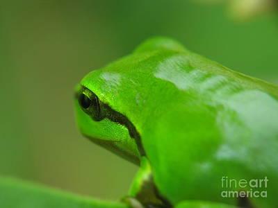Pink Black Tree Rainbow Photograph - Frog by Odon Czintos