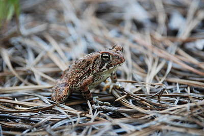 Adult Photograph - Frog Of Pain by Kelly Rader