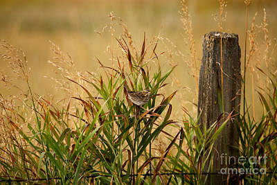 Frolicking In The Grass Print by Beve Brown-Clark Photography