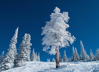 Y120831 Photograph - Frost And Snow Covered Trees On A Cold Winter Day by Karen Desjardin