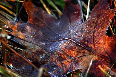 Red Photograph - Frosted Fall by LeeAnn McLaneGoetz McLaneGoetzStudioLLCcom