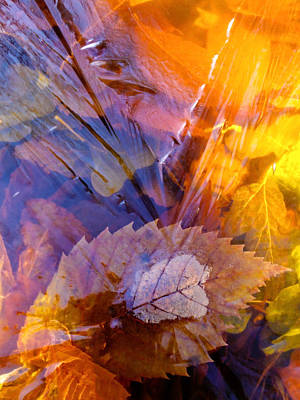 Falltime Photograph - Frozen Leaves ... by Juergen Weiss