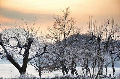 Frozen Trees Print by Mats Silvan