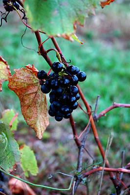 Fruit Of The Vine Print by LeeAnn McLaneGoetz McLaneGoetzStudioLLCcom