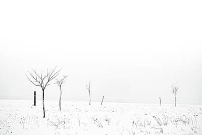 Bare Trees Photograph - Fruit Trees Lost In Winter Fog by Raphael Schneider