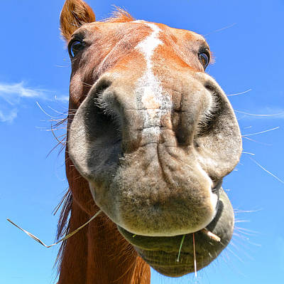 Funny Brown Horse Face Print by Jennie Marie Schell