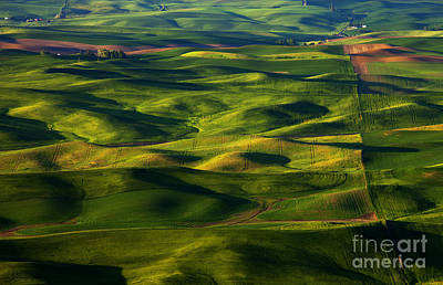 Furrows And Folds Original by Mike  Dawson