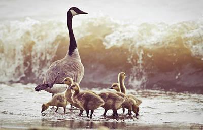Of Birds Photograph - Gaggle by Photogodfrey