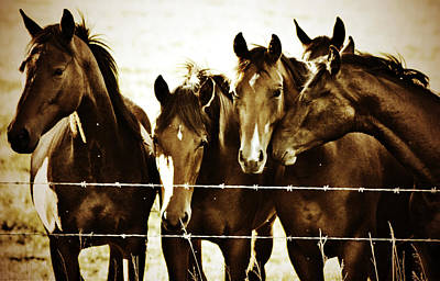 Galloping Brothers  Print by JC Photography and Art