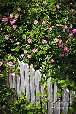 Garden Fence With Roses Print by Elena Elisseeva