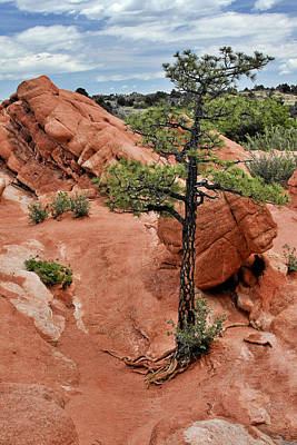 Tree Roots Photograph - Garden Of The Gods  - The Name Says It All by Christine Till