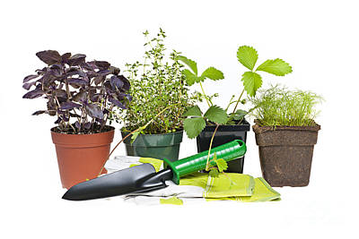 Gardening Tools And Plants Print by Elena Elisseeva
