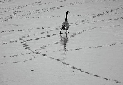 Geese Print by All copyrights reserved by Harris Hui