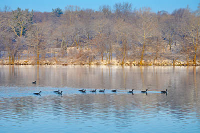 Geese In The Schuylkill River Print by Bill Cannon