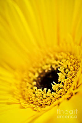 Vibrant Color Photograph - Gerbera Flower by Elena Elisseeva