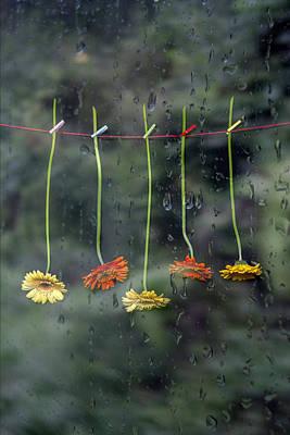 Gerbera In Rain Print by Joana Kruse