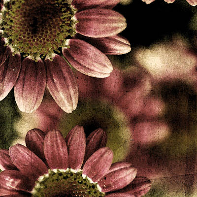 Gerberas Print by Bonnie Bruno
