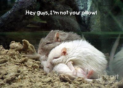 Gerbil Photograph - Gerbil Pillow by Renee Trenholm