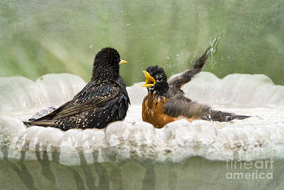 American Robin Photograph - Get Out Of My Bath by Betty LaRue