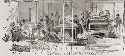 Ginning Cotton By Steam Powered Gin Print by Everett