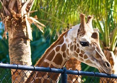 Giraffe Print by Jack Scicluna