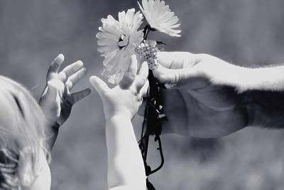 Of Hands Photograph - Giving Her Flowers Sweet Baby Hands by Tracie Kaska