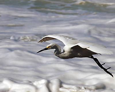 Gliding Egret Print by Joe Schofield