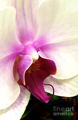 Glorious Orchid Print by Renee Trenholm
