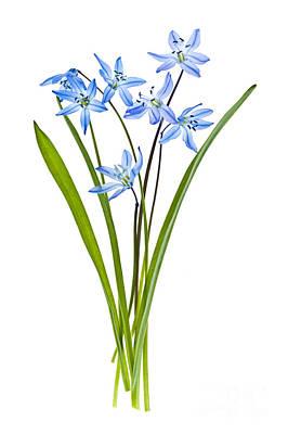 Blue Spring Flowers Print by Elena Elisseeva